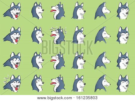 Huskies Expression, embarrassment, angry, shy, happy dog