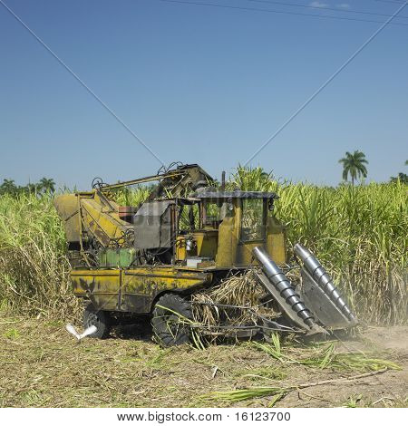 sugar cane harvest, Sancti Spiritus Province, Cuba
