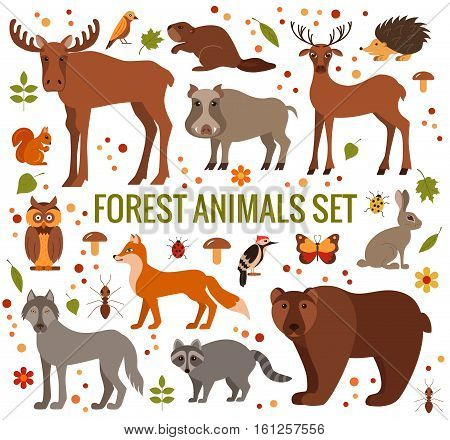 Vector set of forest animals made in cartoon flat style. Zoo collection of fox, wolf, bear, moose, hedgehog, reindeer, owl, boar, raccoon, woodpecker, hare All elements are isolated