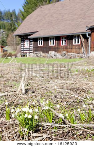 snowflakes in front of cottage in Sedlonov, Orlicke Mountains, Czech Republic