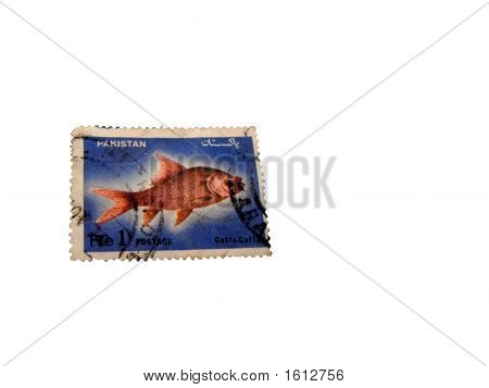 Postal Stamp Of Pakistan Of Seventies Showing Catla Fish