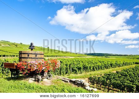 vineyards of Cote de Beaune near Pommard, Burgundy, France