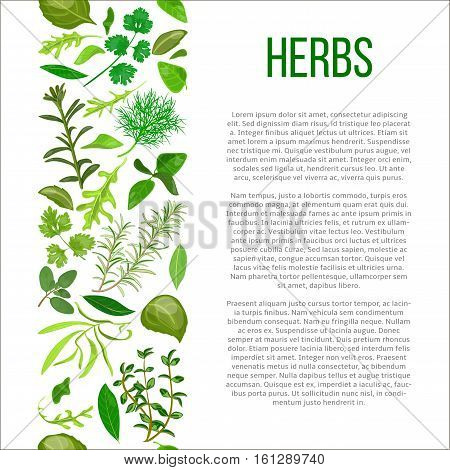 Popular culinary herbs set in column with description. Benefits of cooking spices in informative poster with text. Design for cosmetics, store, market, health care products, flyer, price tag, banner