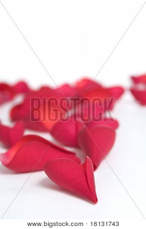 Romantic red rose petals on white with copy space