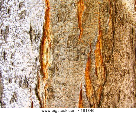 Tree Bark Light