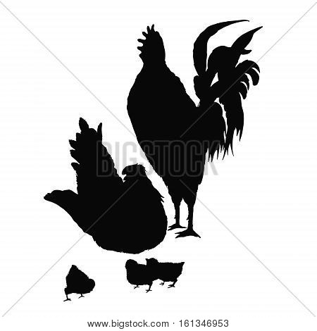 Illustration rooster, hen and chicken. Series of farm animals. Silhouette hand drawing birds family. Rooster fighter and a bully, ready to defend brood and chicken. Vintage engraving style.