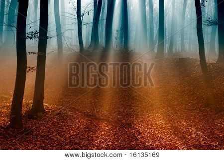 Dark autumn forest with the first light of the sun.