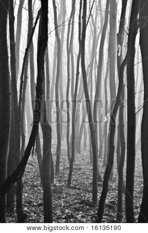 Light entering autumnal deciduous forest