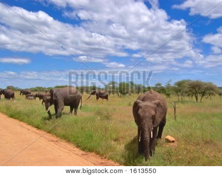 Elephants In The African Savanna, Serengeti Park, Tanzania