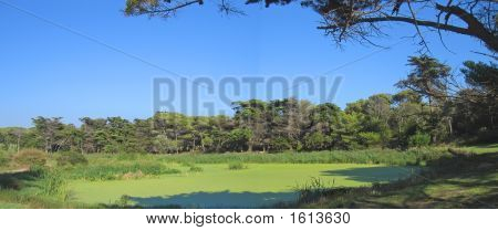 Green Swamp Inside The Countryside, Porquerolles Island, Azur Coast, South Of France, Panorama