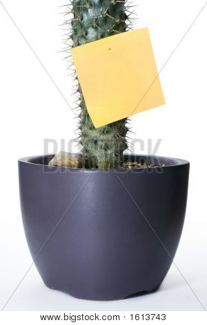 Cactus With Sticker
