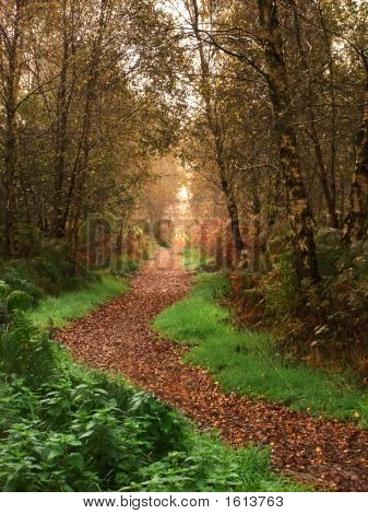 Woodland Path In Fall