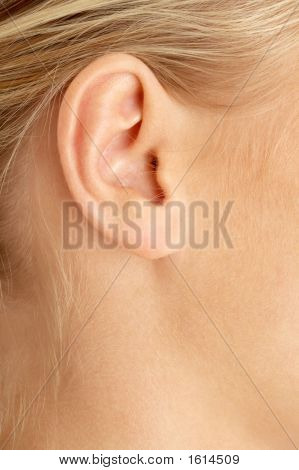 Ear Of Blond