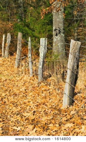 A fence line with leaf covered ground.