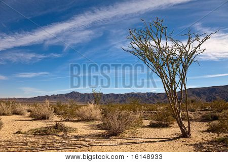 Landscape With Ocotillo