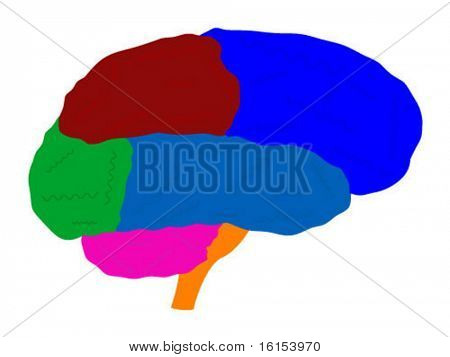 Brain - vector illustration