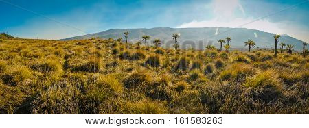 Palms And Bunches Of Grass