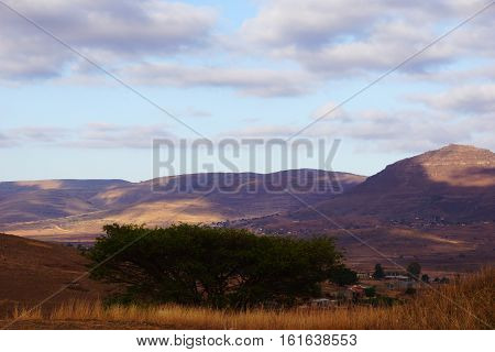 view on the African savannah with acacia on foreground in south Africa