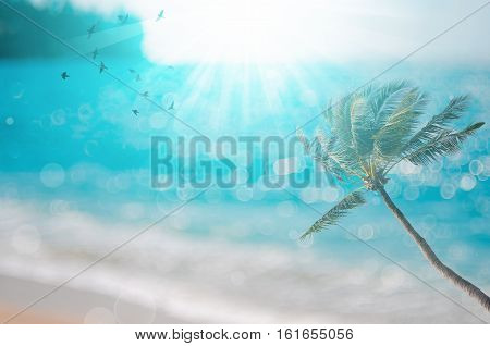 Blur Tropical Sunset Beach With Palm Tree , Birds Fly And Bokeh Sun Light Wave Abstract Background.