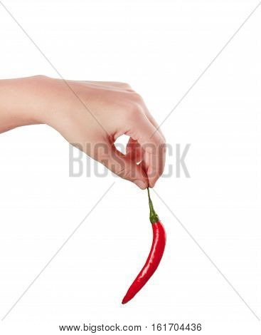Red fresh chili in hand isolated on white background