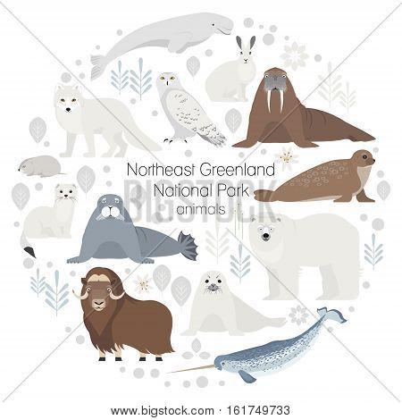 Polar animals. Vector collection of animals .Polar bear, narwal, whale, musk ox, seal, walrus arctic fox ermine
