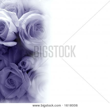 Faded Purple White Roses For Invitation
