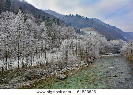 Trees covered in hoar frost next to the Soca River near Tolmin in Primorska Slovenia.