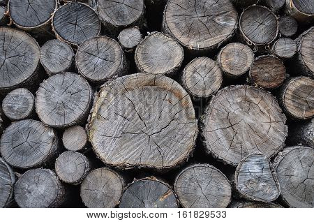 Background of stack of old dry birch firewood chocks