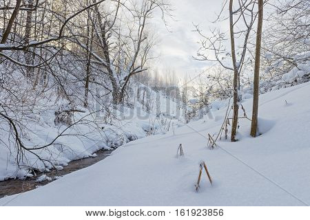 small river in the winter forest ravine