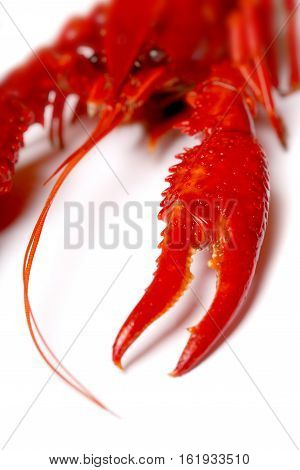 Big Red Lobster Isolated On White Background. Lobster Isolated On A White Background As Fresh Seafoo