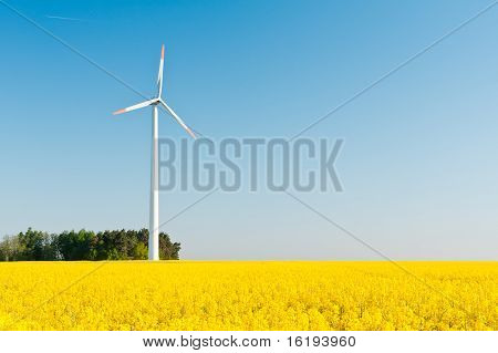 Windmill  Farm In The Rape Field
