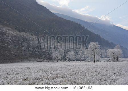 Trees covered in hoar frost near Tolmin in Primorska Slovenia.