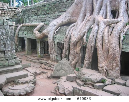 A Banyan Tree Over Old Ruin Temple, Ta Prohm, Bayon, Angkor Tom, Cambodgia
