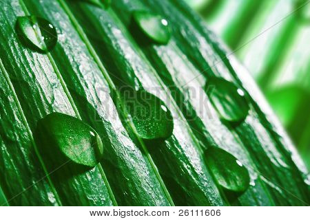 macro water drops on green plant