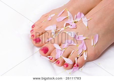 woman legs in lilac petals on white
