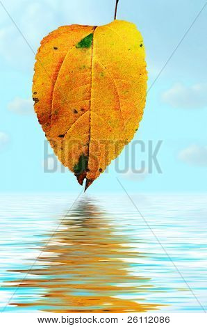 floral background natural autumn tints  leaf in water over blue sky with clouds