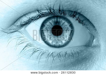 human macro beauty  eye  in blue