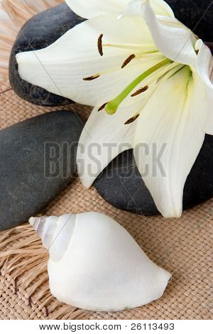 madonna lily spa stones and sea shell on cord
