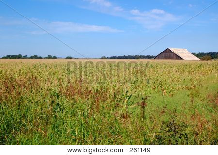Barn In The Califronia Countryside