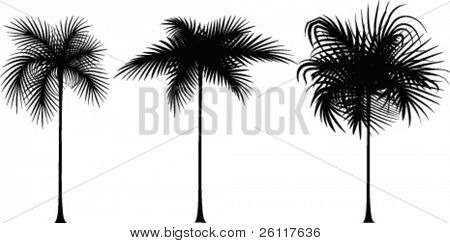 three black silhouette of palm tree on white
