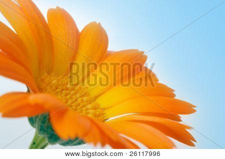 yellow flower under blue sky