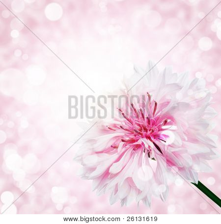 flower with  bokeh summer background