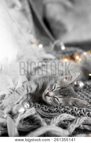 poster of A Cute Gray Kitten Lies On A Gray Plaid In A Christmas Decoration.  Christmas Home Decor