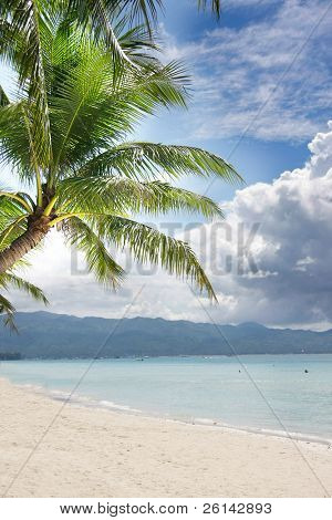 sand beach and palm tree on sea and sky background