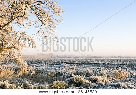 The frost covered landscape in Zeeland, the Netherlands just after dawn, with the golden sunlight lighting up the trees