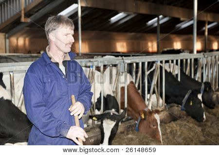 Dairy farmer in the foreground, looking sternly away from the camera with his live stock in the barn behind him with shallow depth of field