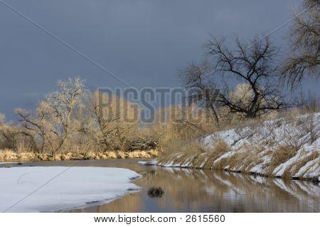 Riparian Forest Along A River In Colorado Prairies
