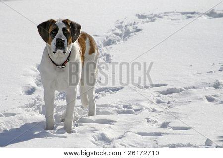 Pet dog standing in snow in winter field
