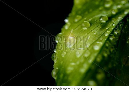Spring leaf with water drops after rainstorm