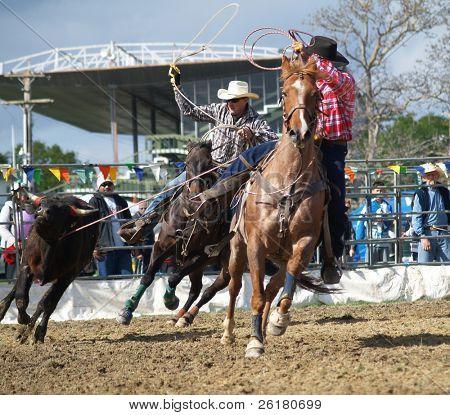 Cowboys with Lassos